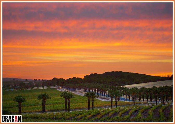 Barossa at Home – The Real Barossa Valley