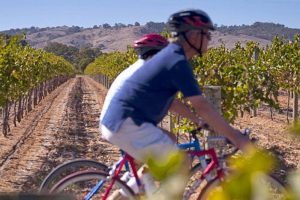 Seppeltsfield Vineyard Cottage luxury Barossa vineyard accommodation - Barossa bike hire