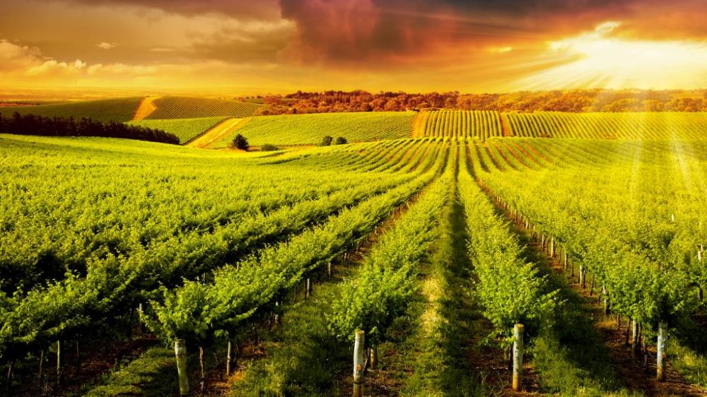 Barossa Seasons and weather … when is the the best time of year to visit the Barossa?