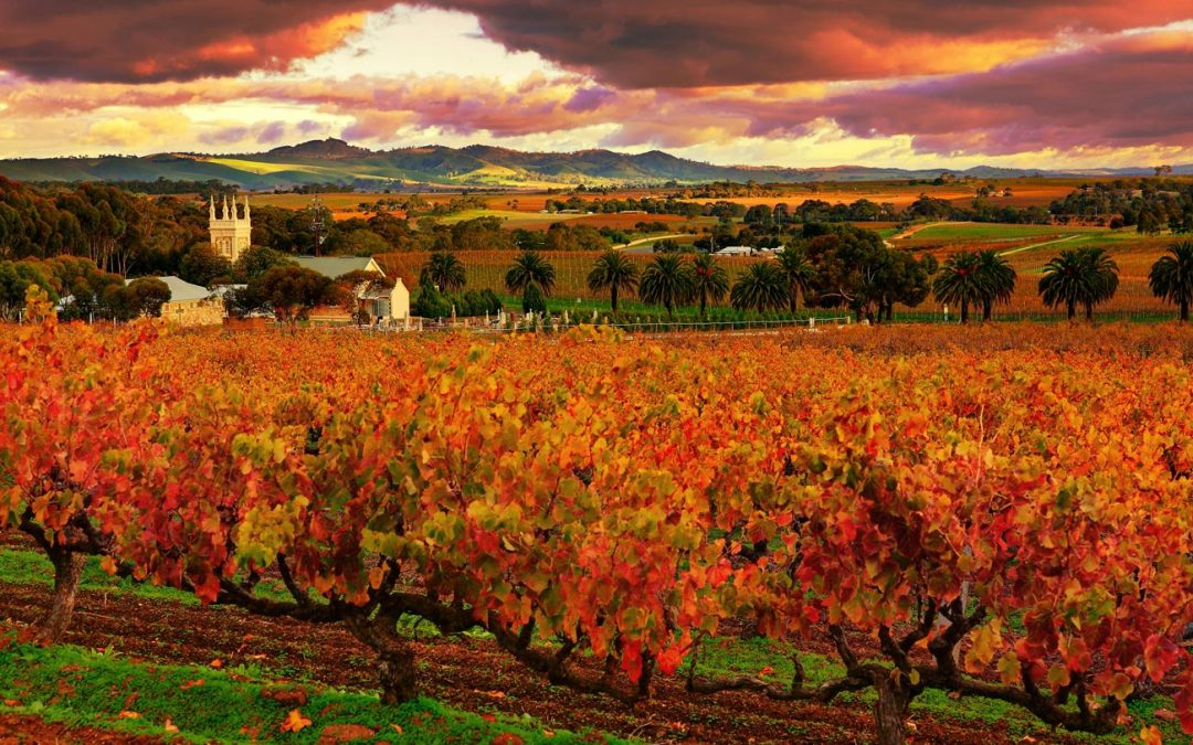Autumn in the Barossa - Seppeltsfield Vineyard Cottage